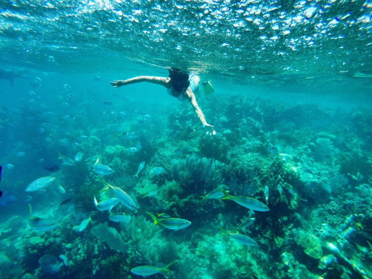 Snorkeling in Paradise Island